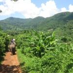 Día 8: Selva tailandesa (I)
