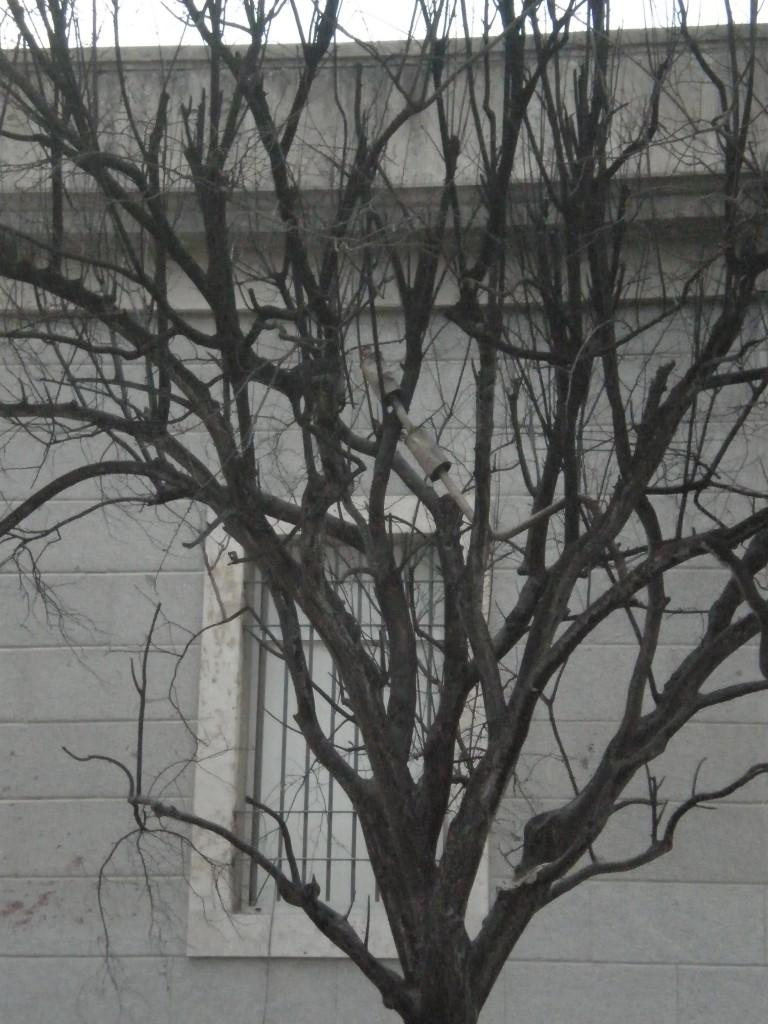 Tubo de escape del coche-bomba encima de un árbol