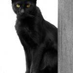 Tropezarse con un gato negro da mala suerte