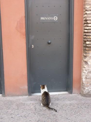 gato-paciente-espera