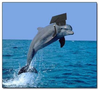 Los delfines tienen su propio lenguaje